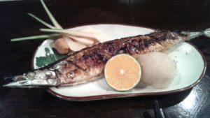 厚岸産 秋刀魚